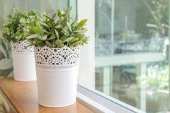 Artificial plant pot Stock Images