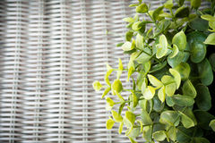 Artificial plant on wickerwork background Stock Photos