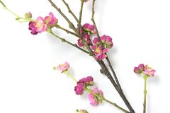 Artificial Plum Blossom Royalty Free Stock Photos