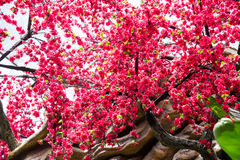 Artificial plum flower Royalty Free Stock Images
