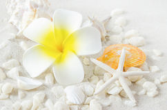 Artificial Plumeria flower with starfish and seashells on white Stock Photo