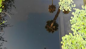 Artificial pond with aquatic plants stock video
