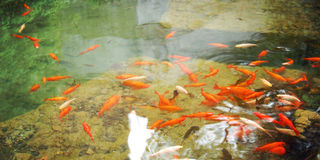 Artificial pond with goldfishes for relaxation - toned photo. Stock Photo