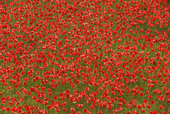 Artificial poppy flowers Stock Images