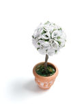 Artificial Pot Plant Stock Photography