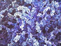 Artificial purple flowers is background stock image