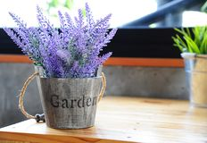 Artificial purple lavender flower in flowerpot on table. With daylight Stock Images