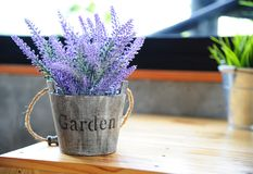 Artificial purple lavender flower in flowerpot on table. With daylight Royalty Free Stock Photography