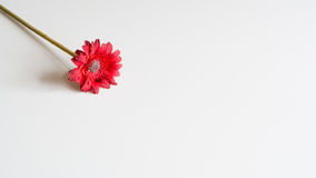 Artificial red flower on neutral background Stock Photography
