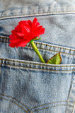 Artificial red rose in blue jeans pocket Stock Photo