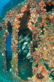 Artificial Reef Stock Images