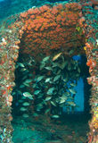Artificial Reef-Ancient Mariner Royalty Free Stock Image