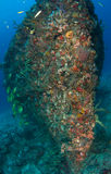 Artificial Reef-Berry Patch Royalty Free Stock Image