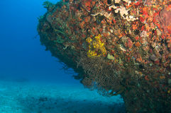 Artificial Reef named the Berry Patch Stock Image