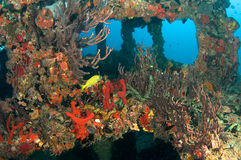 Artificial Reef named the Berry Patch Stock Photos
