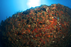 Artificial Reef named the Berry Patch Stock Photography