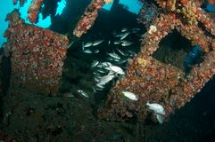 Artificial Reef in South Florida Stock Images