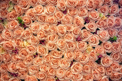 Artificial rose flowers background Royalty Free Stock Photo