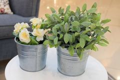 Artificial Roses and Green Plants in Metal Pots. Artificial Yellow Damask Roses or Rosa Damascena Flowers with Green Plants in A Living Room for Home and Office Stock Photos