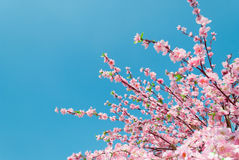 Artificial Sakura flowers Royalty Free Stock Image