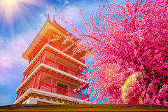 Artificial Sakura flowers or cherry blossoms and Pagoda  on japan style with Wood table and blue sky background Royalty Free Stock Image