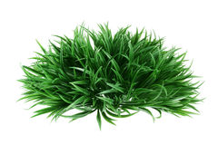 Artificial Shrub. On White Background royalty free stock images