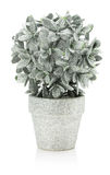 Artificial silver houseplant isolated on the white background Royalty Free Stock Image