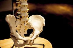 Artificial skeleton in the laboratory closeup image. Pile bone in close-up. Laboratory and medical image concept. royalty free stock photography
