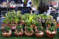 Artificial small bonsai and bamboo in pot for sale royalty free stock images