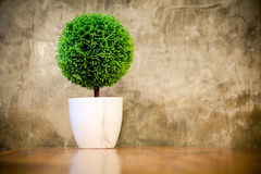 Artificial small tree in a white flower pot Royalty Free Stock Image