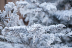 Artificial snow on a christmas tree Royalty Free Stock Photo