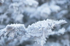Artificial snow on a christmas tree Stock Photos