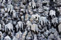 The artificial stalactite wall made of lime stucco in early Baroque Wallenstein Garden, built with the Wallenstein Palace stock photo