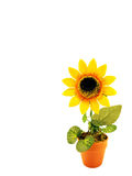 Artificial sunflower. In the pot Stock Photos