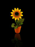 Artificial sunflower. Artificial yellow sunflower in the pot Stock Images