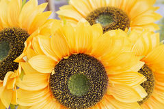 Artificial sunflower Stock Photos