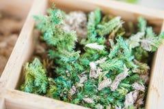 Artificial terrarium supply kit moss plant dirt decoration box Royalty Free Stock Photos
