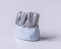Artificial tooth Stock Image