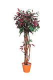 Artificial Trees In Pots. Royalty Free Stock Photography