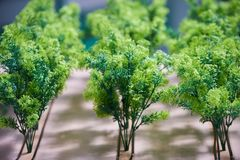 Artificial trees plants planted in a row as agriculture, farming and gardening concept. Close-up stock photo