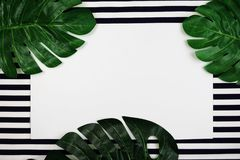 Artificial tropical leaves monstera with space copy on blue and white stripe background. Green artificial tropical leaves monstera with space copy on blue and stock images