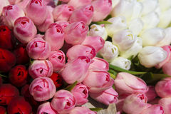 Artificial Tulip Stock Images