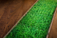 Artificial turf on hardwood floor Royalty Free Stock Images