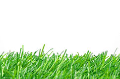 Artificial Turf for Soccer Field on White Background. Royalty Free Stock Photography