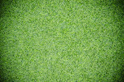 artificial turf Stock Images