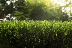 Free Artificial Turf With Sunshine Stock Image - 130043681