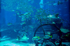 Artificial underwater ruins with fishes swimming around the aquarium Stock Photos