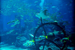 Artificial underwater ruins with fishes swimming around in the big aquarium Stock Photo