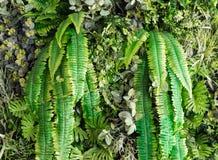 Artificial vertical garden Royalty Free Stock Image