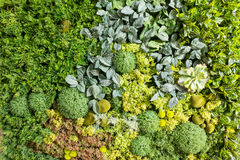 Artificial Vertical Gardens with Fake Plants on Walls. Royalty Free Stock Images